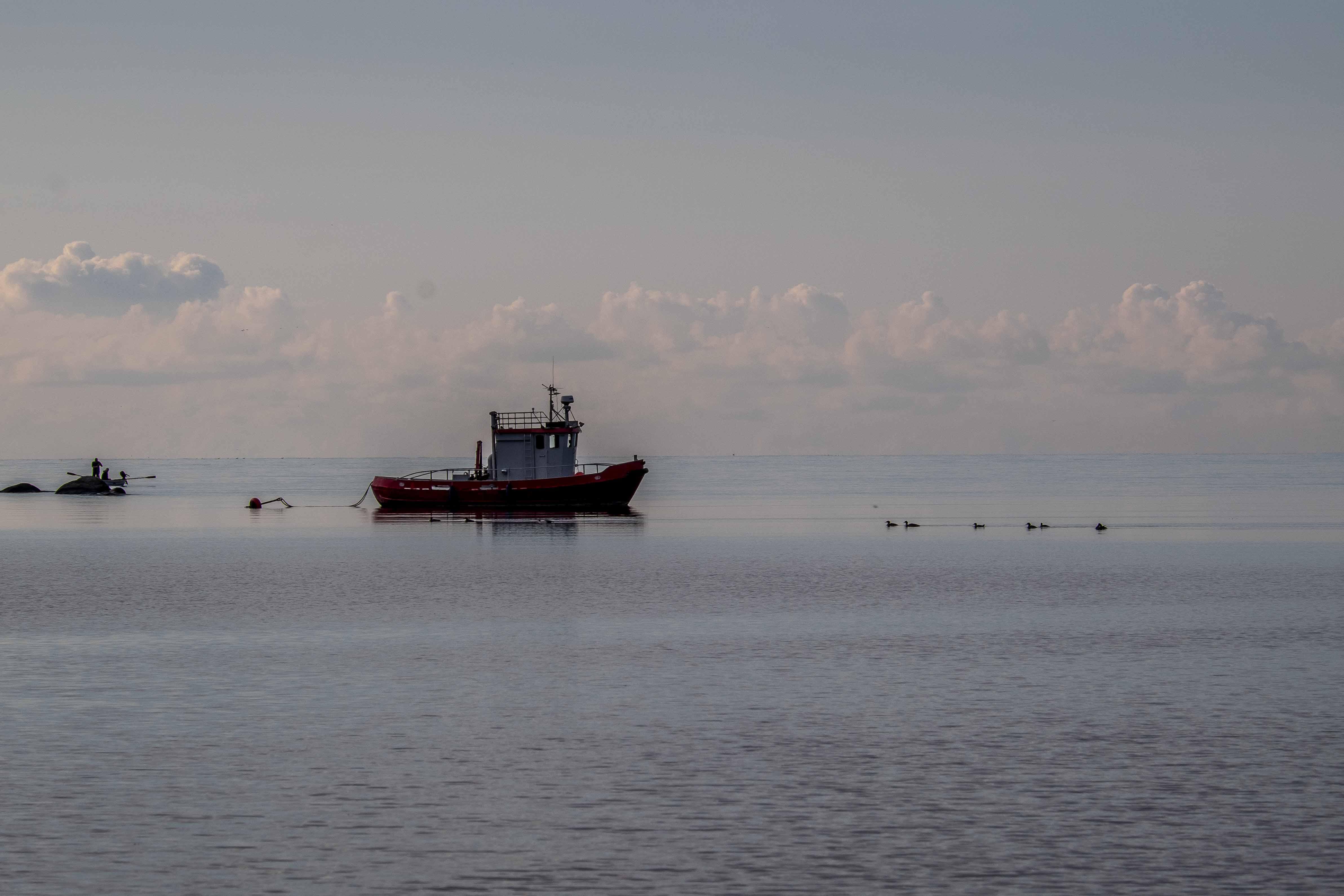 Dragsö: Papa Ente und die Entenkinder
