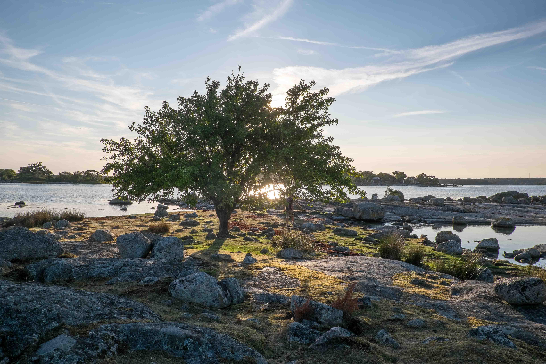 Bockö: Baum am Grasstrand